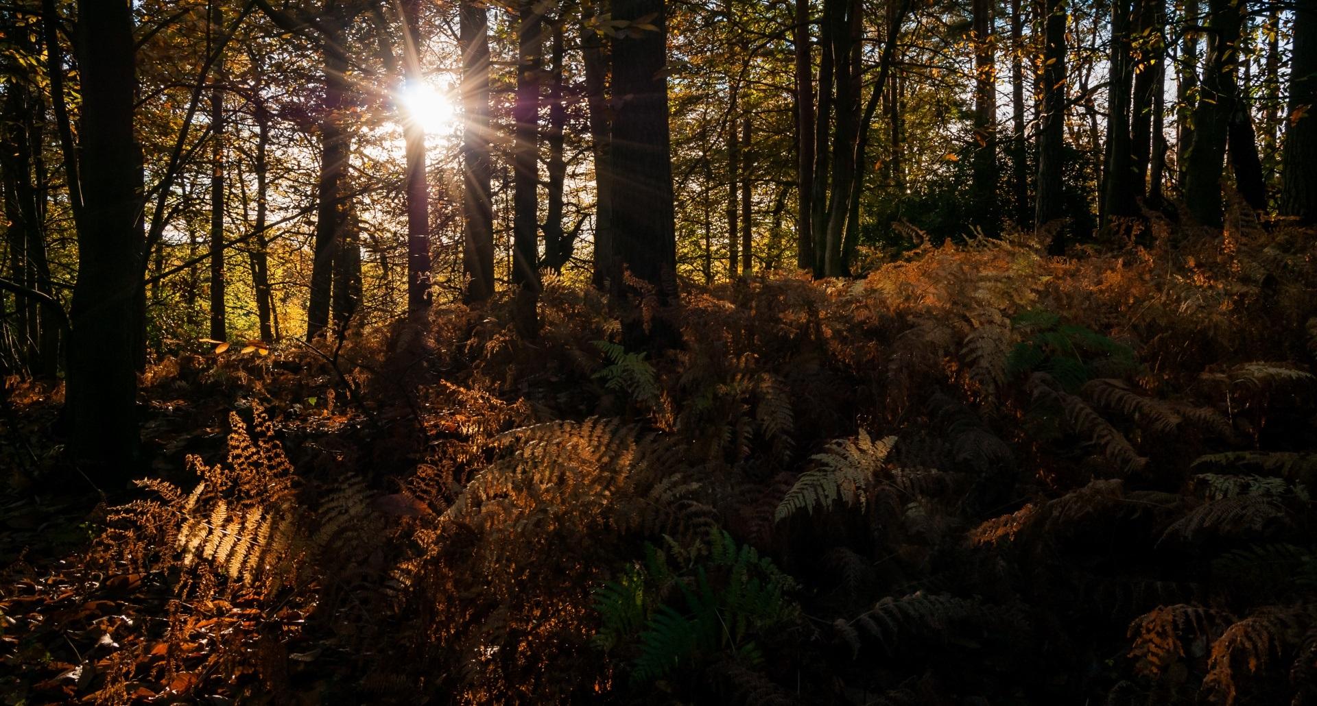 autumn_rays-wallpaper-1920x1080